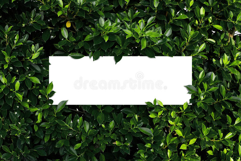 Tropical and leaves with paper card note. stock image
