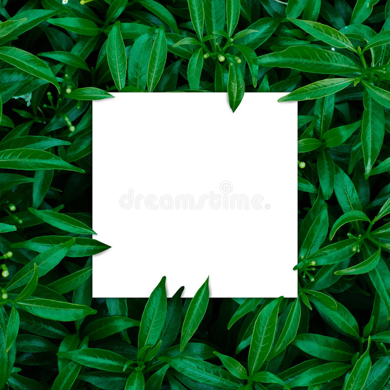 Tropical and leaves with paper card note. royalty free stock photos