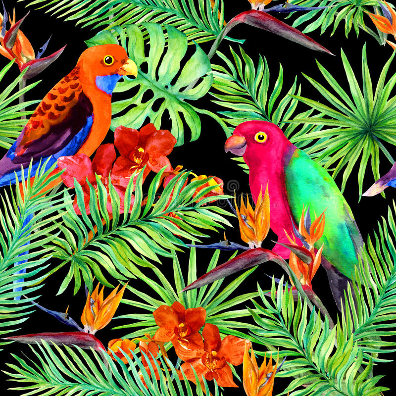 Tropical leaves, parrot birds, exotic flowers. Seamless jungle pattern on black background. Watercolor royalty free illustration