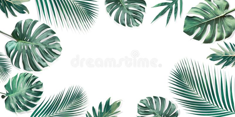 Tropical leaves set with white copy space background.Nature royalty free stock images