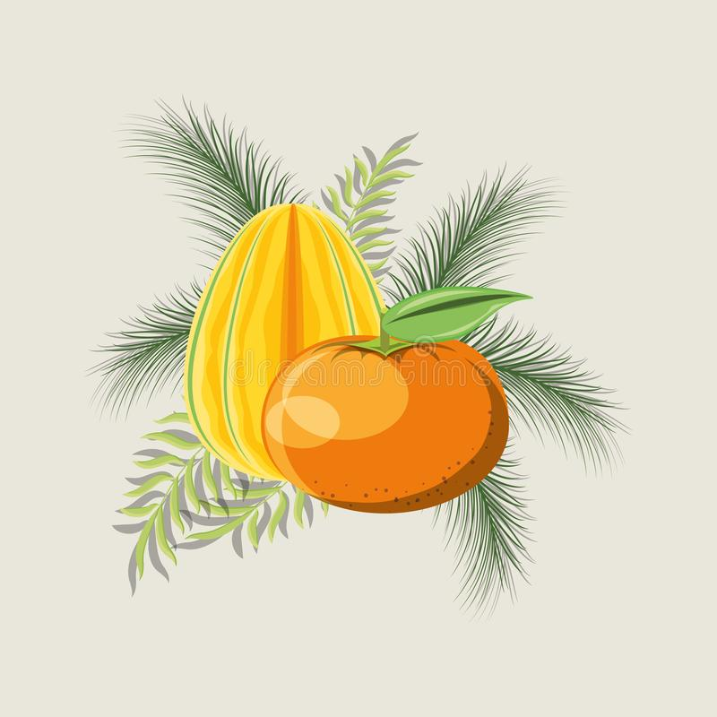 Citric fruits design. Tropical leaves with star fruit and tangerine over gray background, colorful design. vector illustration vector illustration