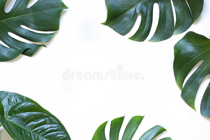 Tropical leaves summer concept frame on the white background. Top view. Copy space stock photo