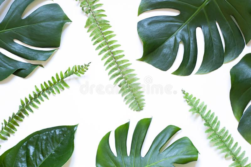 Tropical leaves summer concept pattern on the white background. Top view royalty free stock photography