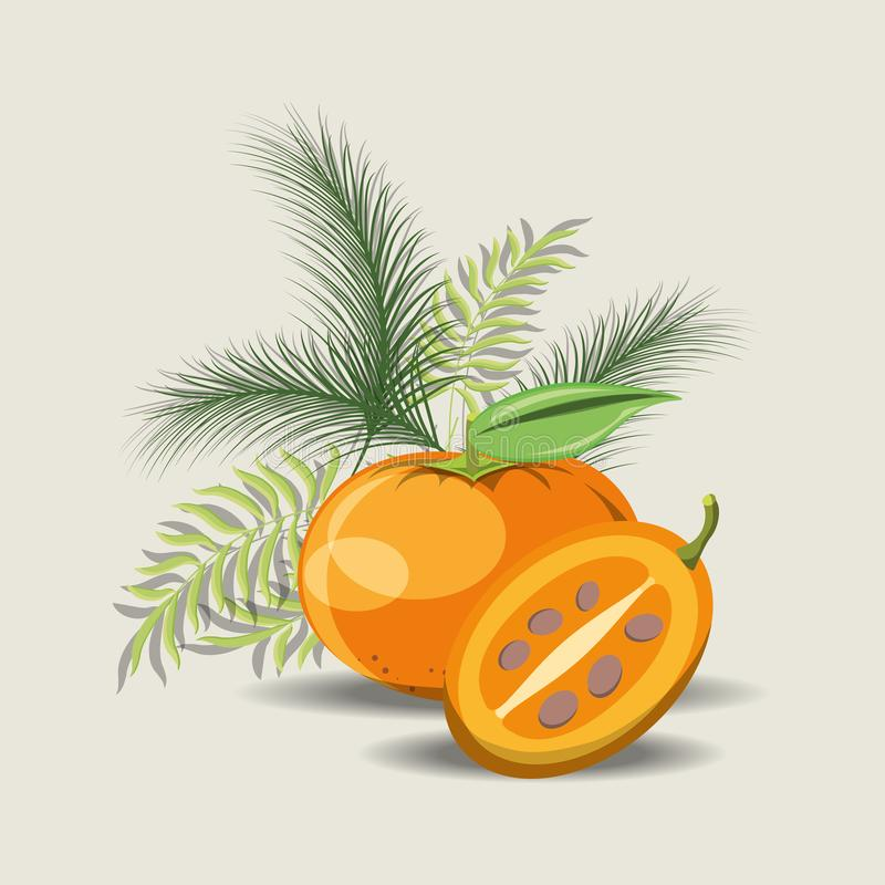 Citric fruits design. Tropical leaves with tree tomato and tangerine over gray background, colorful design. vector illustration royalty free illustration