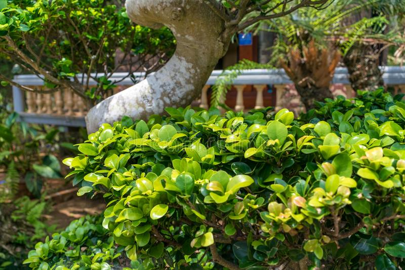 Tropical leaves under the sun in the park royalty free stock photo
