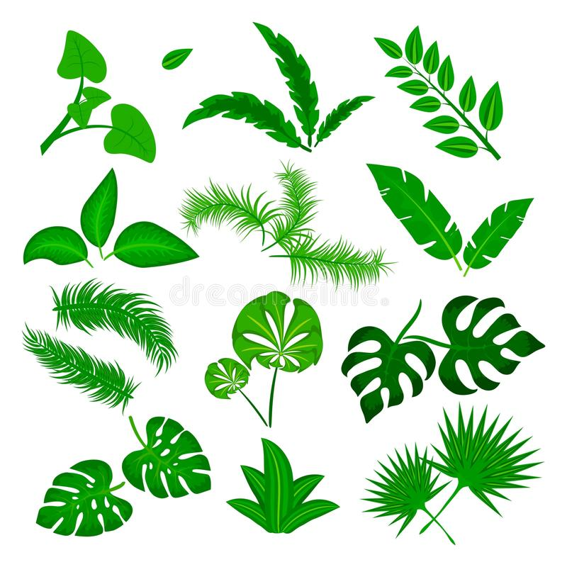 Tropical leaves vector set isolated on white background. Different green leaf collection. Jungle forest flora. Banana stock illustration