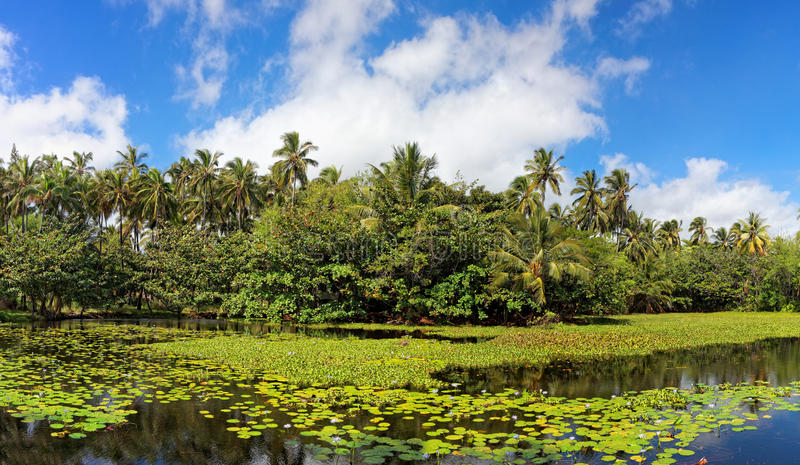 Tropical lily pond royalty free stock images