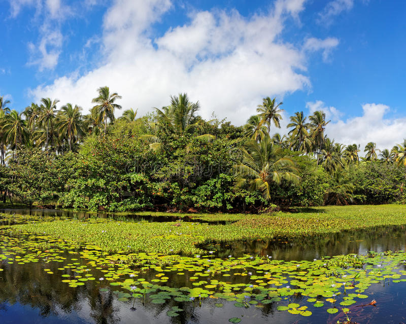 Tropical lily pond stock photography