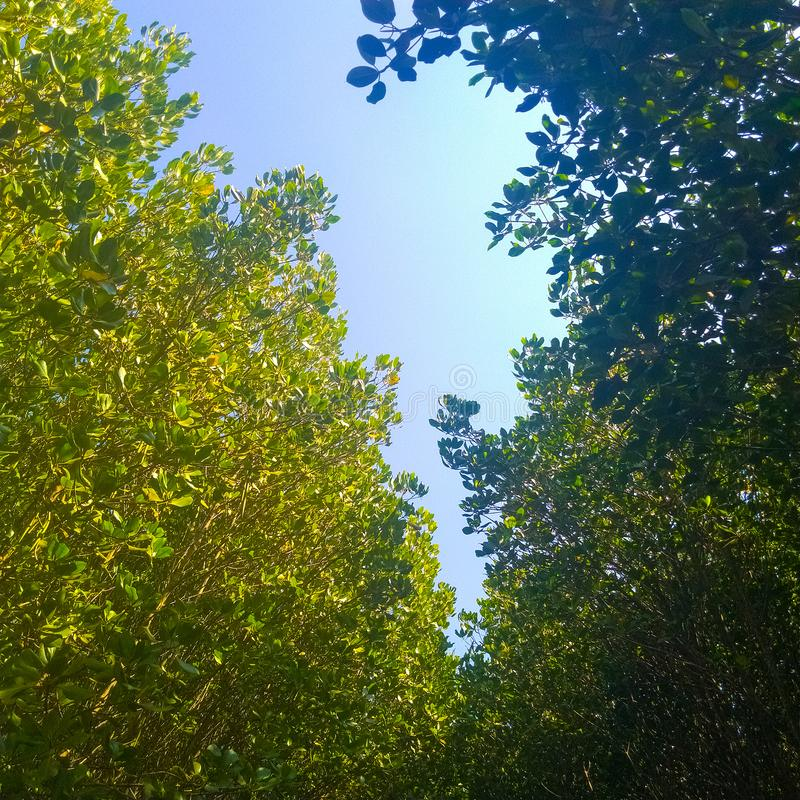 Tropical mangrove forest to prevent abrasion. Great, scenery, bright, sky, beautiful, view, cloud, clouds, skies, beach, landscape, outdoor, beauty, wonderful royalty free stock photography