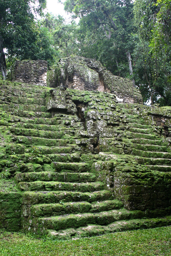 Download Tropical maya stairs stock photo. Image of aztec, cult - 5019784