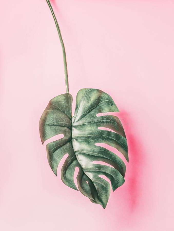 Tropical Monstera leaf on pink background. Creative layout royalty free stock photos