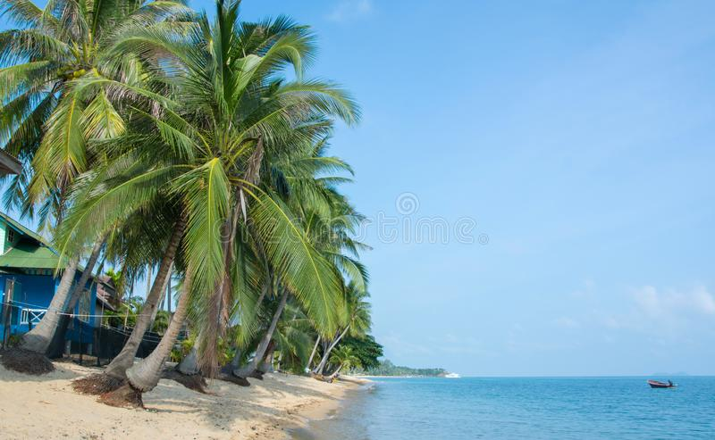 Tropical morning sand beach with coconut palm trees and clear blue sky. Thailand, Samui island, Maenam royalty free stock image