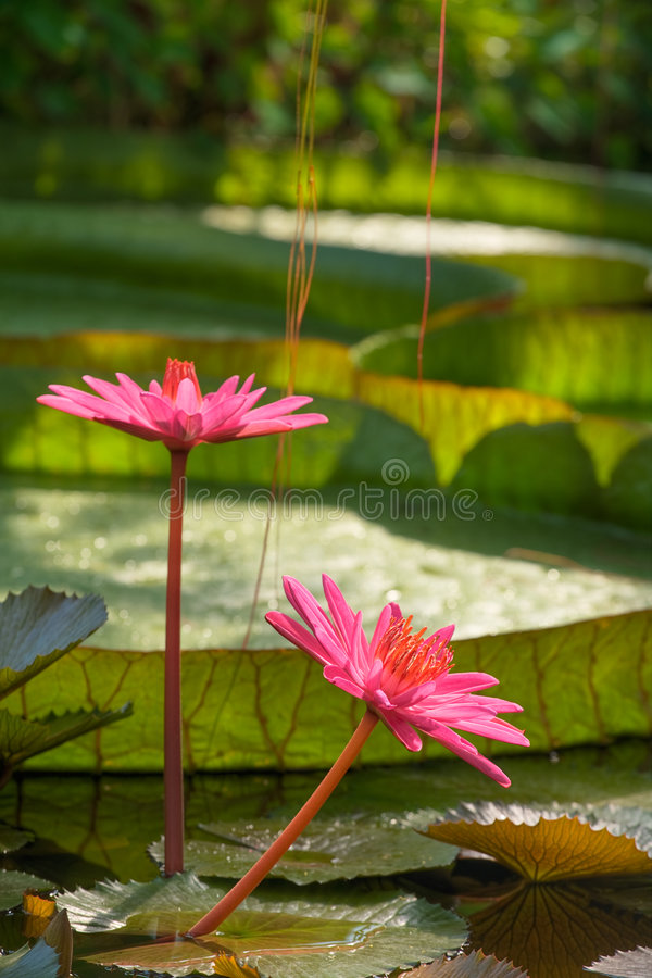 Free Tropical Nature Stock Photography - 2823332
