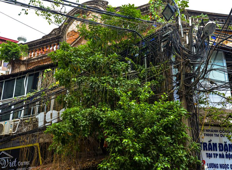 Nature regaining the city. Hanoi old city center, Vietnam. Tropical nature growing on old buildings in downtown Hanoi, old quarter, Vietnam. Urban confusion and