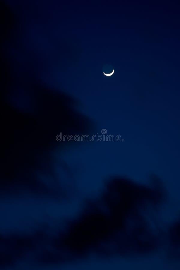 Download Tropical night stock photo. Image of twilight, night - 19066554