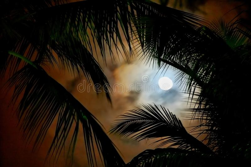 Tropical night royalty free stock photos