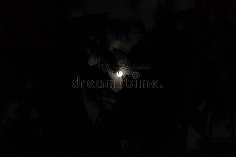 Tropical Night Full Moon And Palm Leaf Birds Fly Abstract