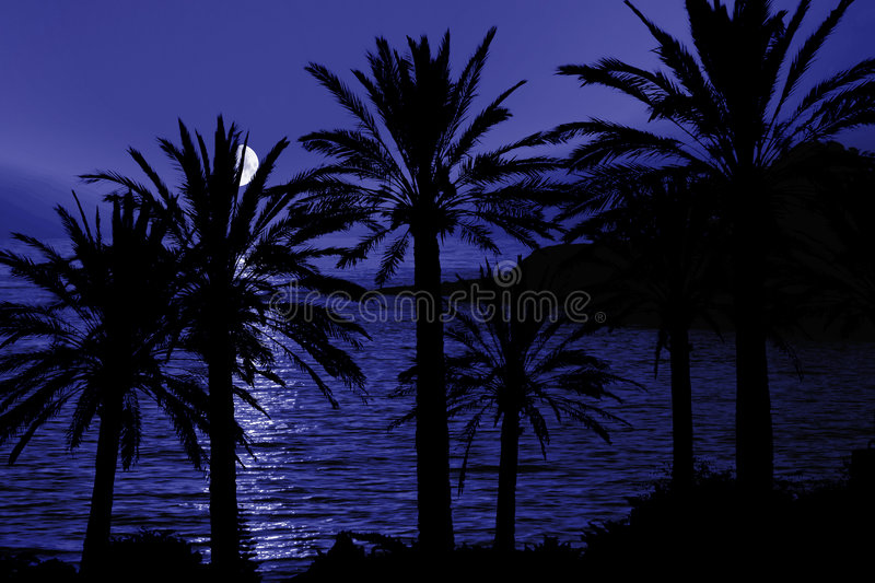 Tropical Night Silhouette royalty free stock photography