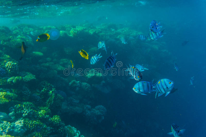 Tropical ocean life. Coral reef full of fish floating under water surface. Sunbeams light through ripples. stock photo