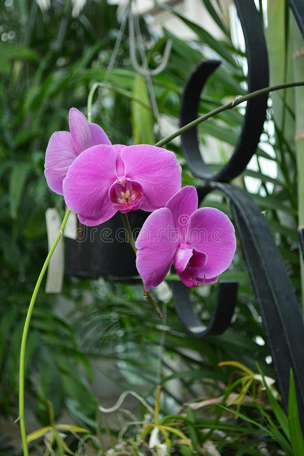 Tropical Orchid Bloom royalty free stock photography