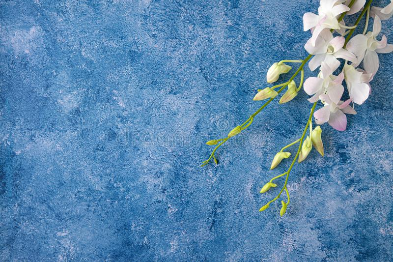 tropical orchid on blue and white background royalty free stock photography