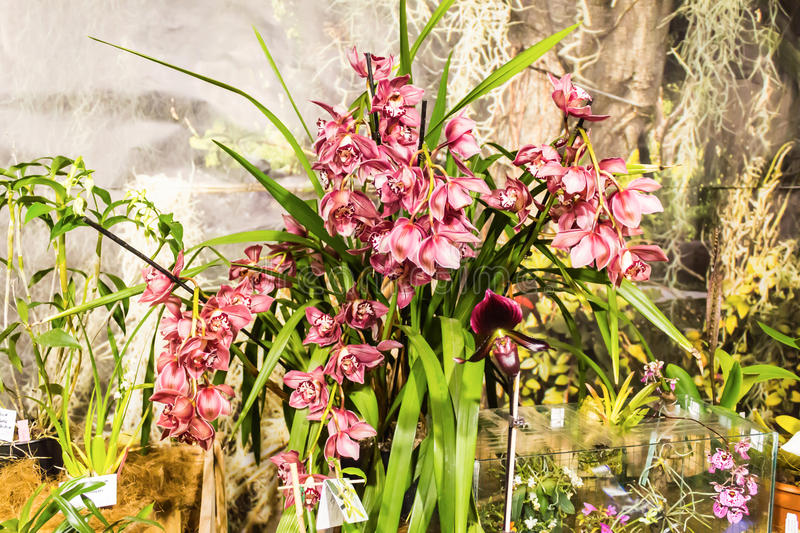 Download tropical orchid is one of the most beautiful flowers on earth stock photo