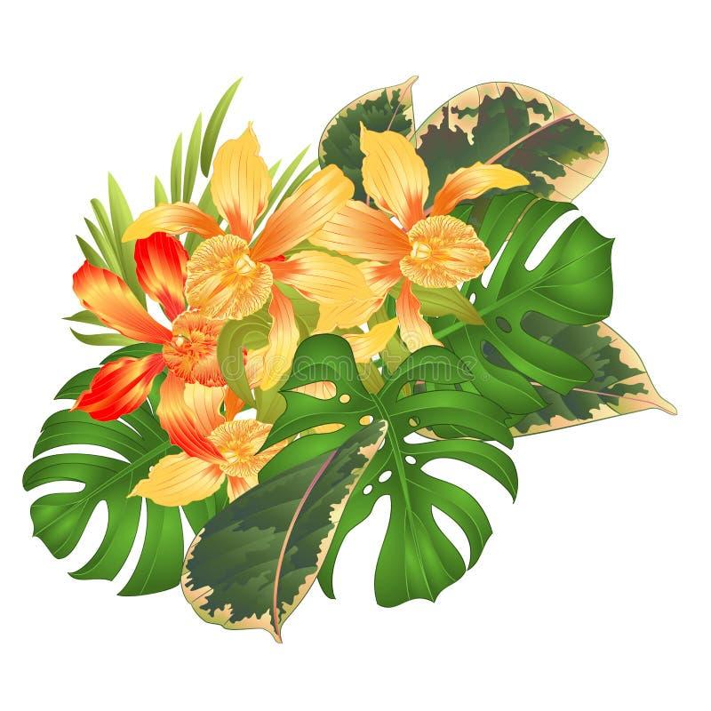 Phalaenopsis Green Tiger Stars Hybride NEW Orchidee Orchideen