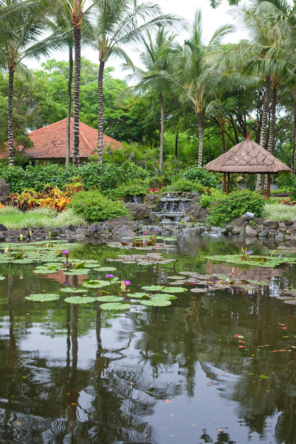 Tropical outdoor garden with palm trees and pond. Beautiful tropical outdoor garden with palm trees and pond of water lilies royalty free stock images
