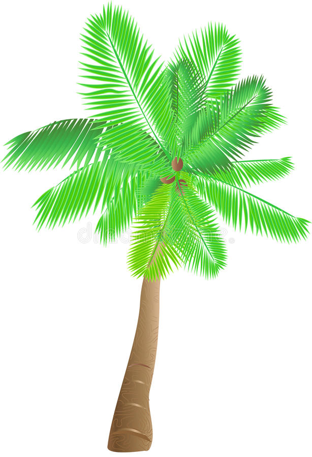 Free Tropical Palm Royalty Free Stock Image - 14666046