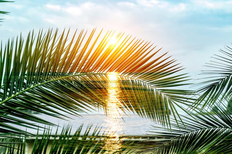 Tropical palm branches. Double exposure. Summer background. Tropical palm branches. Double exposure. Summer background royalty free stock photography