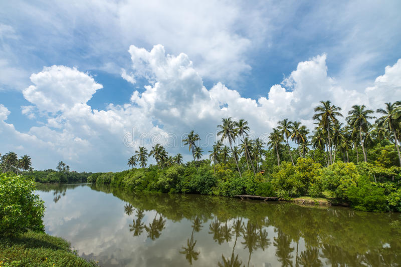 Tropical palm forest on the river bank. Tropical thickets mangrove forest on the island of Sri Lanka. royalty free stock photos