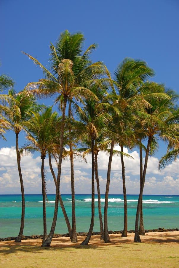 Tropical palm grove on beach stock photos
