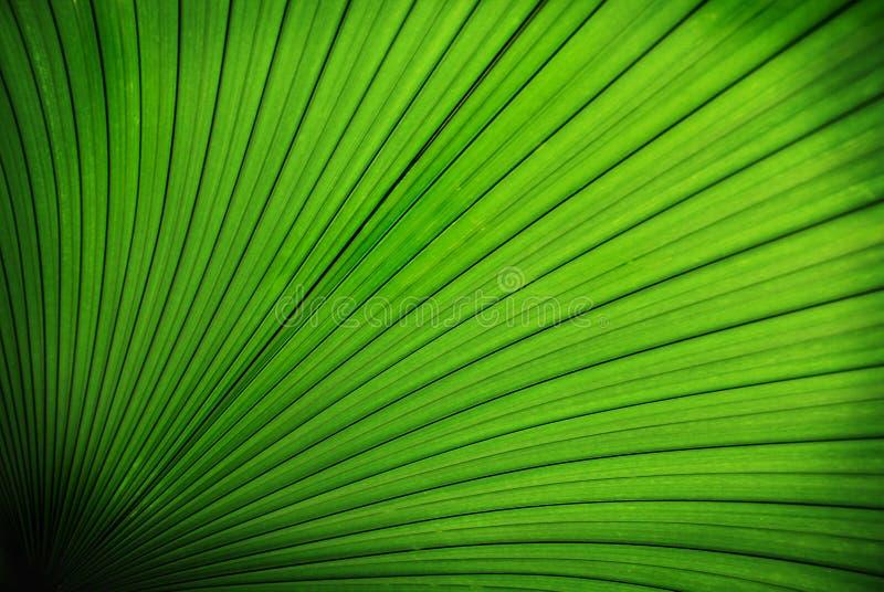 Download Tropical palm leaf stock photo. Image of huge, large, flat - 5437928