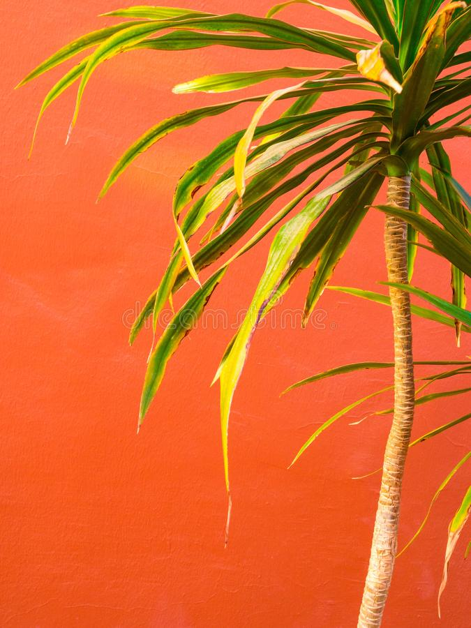 Tropical palm leaf, floral pattern background. Living Coral color of the year 2019. Macro royalty free stock photos