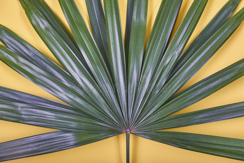 Tropical palm leaf on pastel yellow background. stock photo
