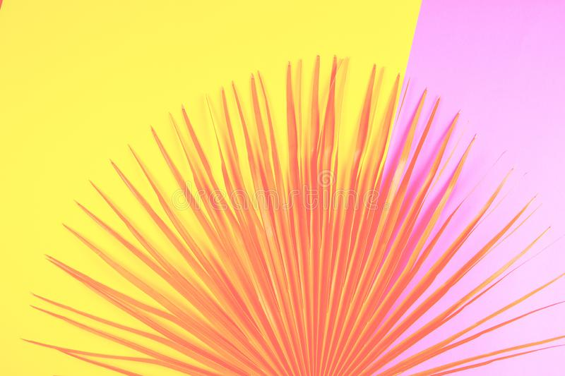 Tropical palm leaf on pink and yellow background. Flat lay, top view, toned trend colors. Tropical palm leaf on pink and yellow background. Top view, toned trend royalty free stock photography