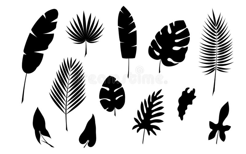 Tropical palm leaf silhouette vector stock illustration