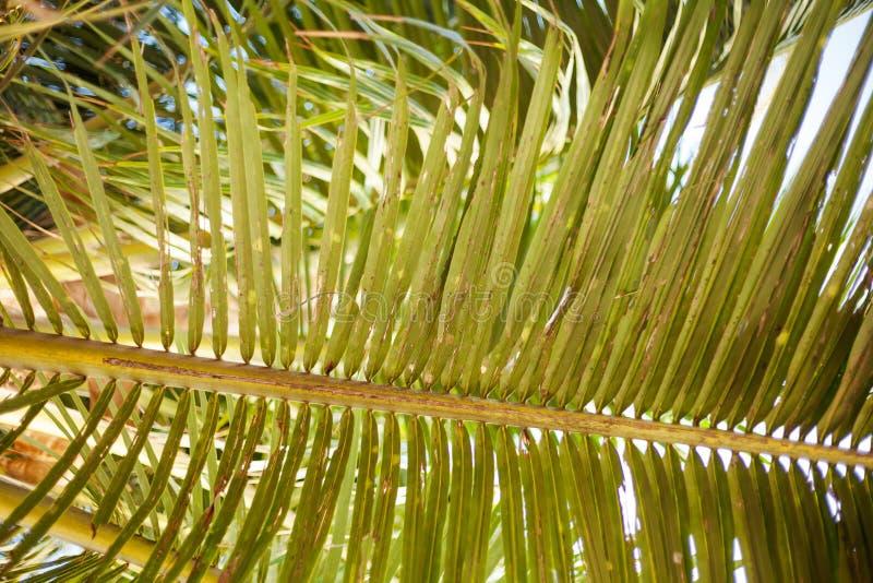 Tropical palm leaf stock image