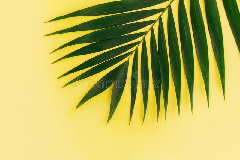 Tropical palm leaf on yellow background. Minimal concept royalty free stock image