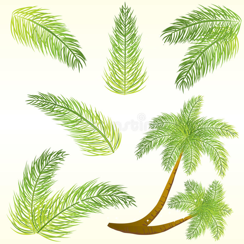 Tropical palm leaves stock illustration