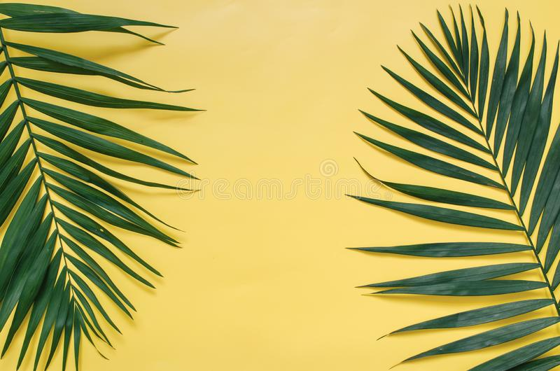 Tropical palm leaves border frame isolated on pastel yellow background isolated stock photo