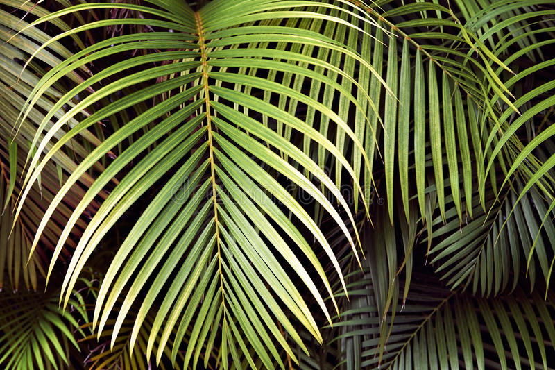 Tropical palm leaves, jungle leaf seamless floral pattern background.  royalty free stock photo