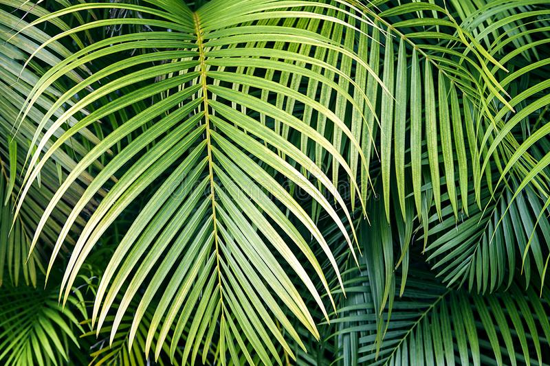 Tropical palm leaves, jungle leaf seamless floral pattern background. stock photography