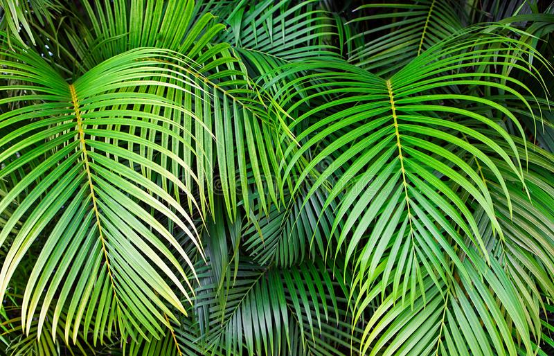 Tropical palm leaves, jungle leaf seamless floral pattern background stock image