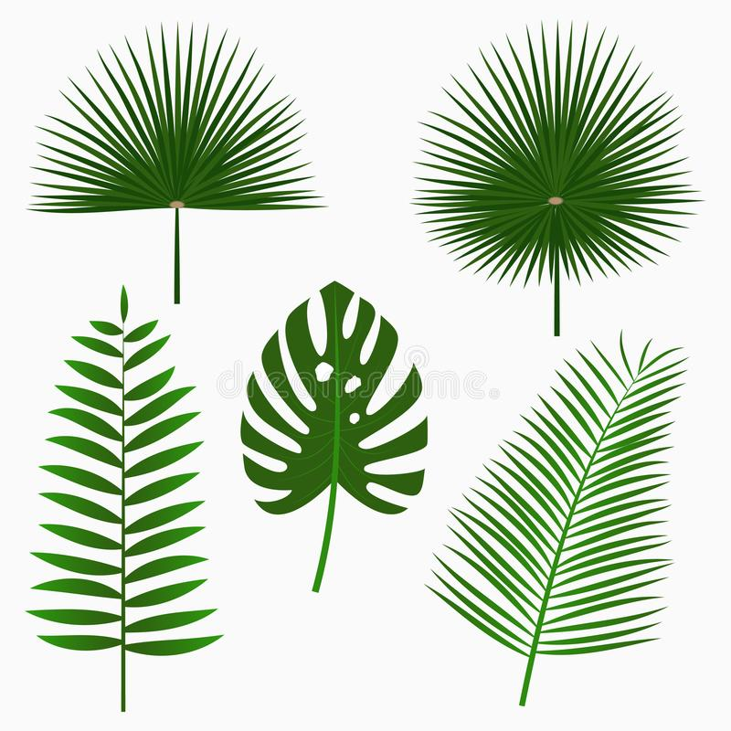 Tropical palm leaves, jungle leaf set isolated on white background. Exotic plants. Vector. Tropical palm leaves, jungle leaf set isolated on white background stock illustration