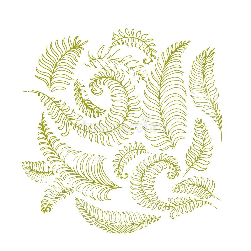Tropical palm leaves, jungle leaves seamless vector floral pattern background royalty free illustration