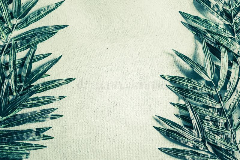 Tropical Palm leaves on light green background frame royalty free stock image