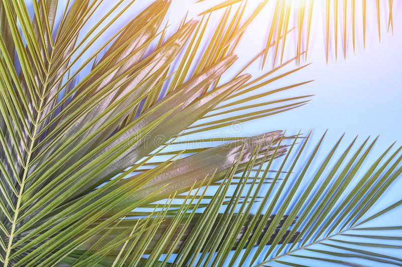 Tropical palm leaves on pastel blue background. Toned stock images