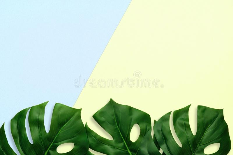 Tropical palm leaves top view bottom border on a blue and yellow background stock photography