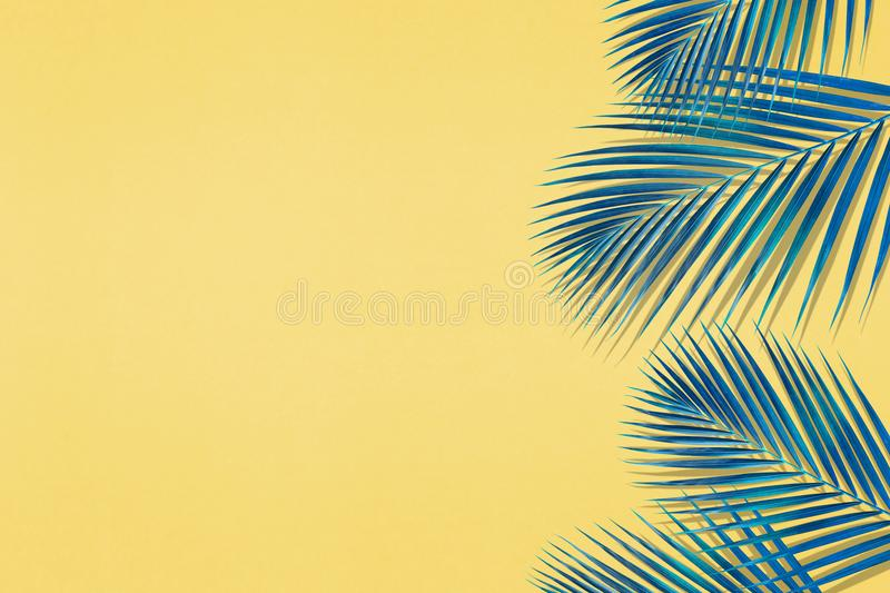 Tropical palm leaves pattern with copy space on pastel color stock photo